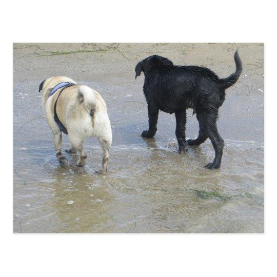 Friends at the Beach Postcard