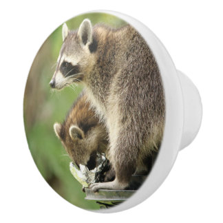 Friends & Blessings Emerson Raccoon Cabinet Knob /