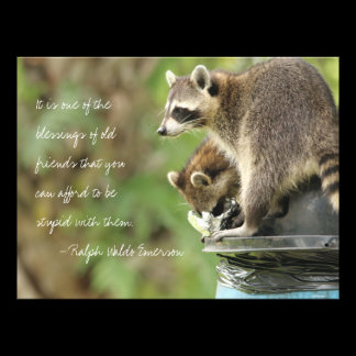 Friends & Blessings Friendship Quote Raccoons Photo Print