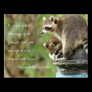 Friends & Blessings Friendship Quote Raccoons Postcard