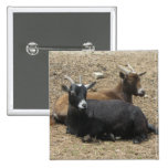 Friends Forever Goats 2 Inch Square Button