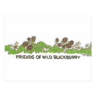 Friends of Wild Blackberry! Postcard