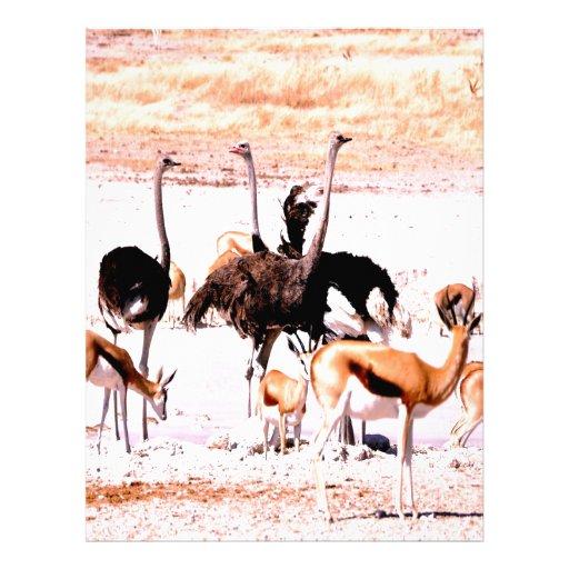 Friends ostrich bird antelope springbok letterhead