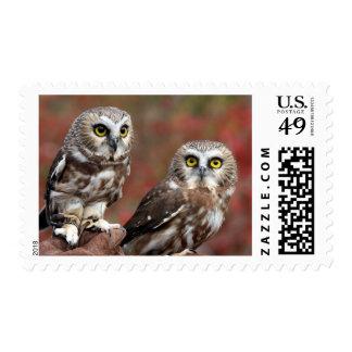 Friends Postage Stamp