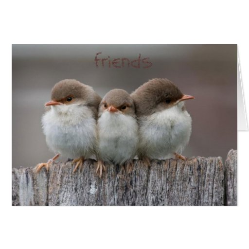 Friends Stick Together Note Cards