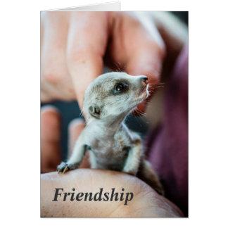 Friendship - FKMP Seasons Greetings Cards