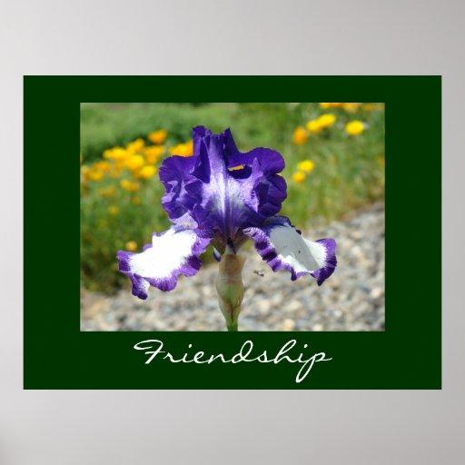 Friendship gifts art prints Purple Iris Flower Poster