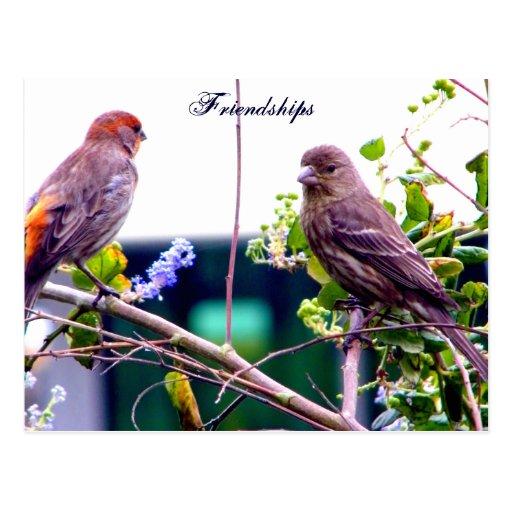 Friendship_Postcard Tarjeta Postal