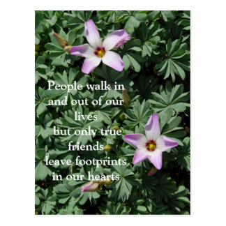 Friendship - Purple flowers Postcard