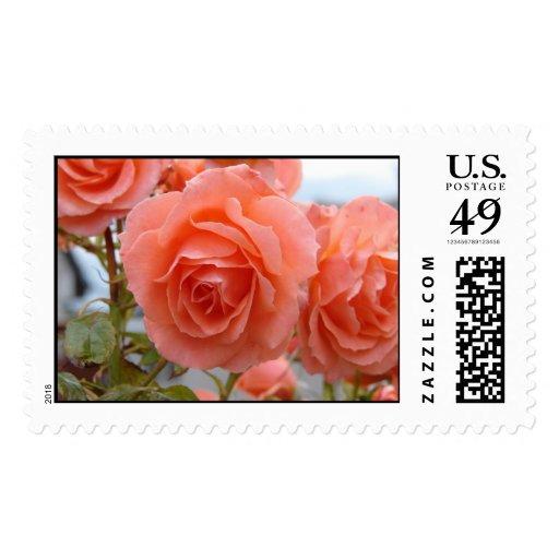 Friendship Roses Postage Stamp