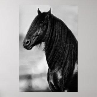 Friesian black stallion horse poster