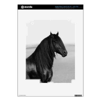 Friesian black stallion horse decal for iPad 3