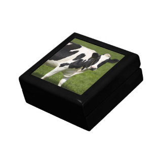 Friesian cow gift box