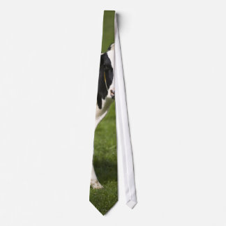 Friesian cow tie
