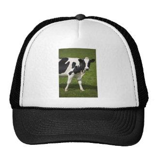 Friesian cow trucker hat