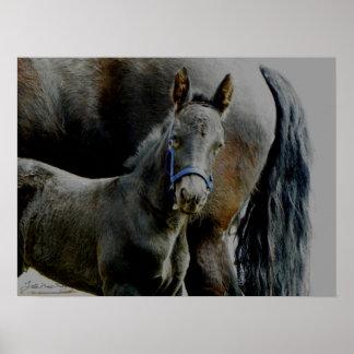 Friesian Foal Malachi Print