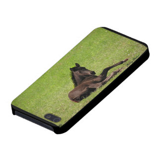 Friesian Foal Photo Case Cover For iPhone 5/5S