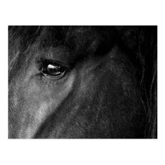 friesian horse eye postcard