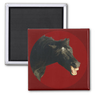 Friesian Horse in Red circle Refrigerator Magnet