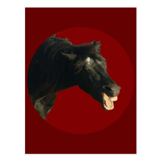 Friesian Horse in Red circle Postcard