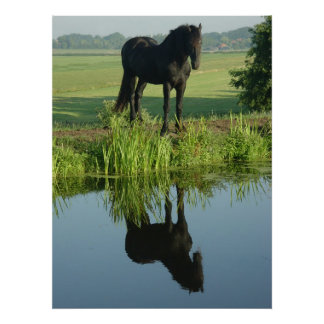 Friesian Horse Reflection in water Poster