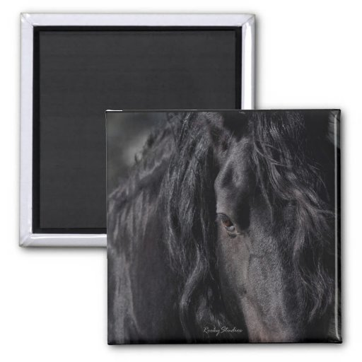 Friesian Image Refrigerator Magnets