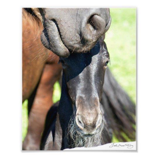 Friesian mare and Mintse foal Photo Print