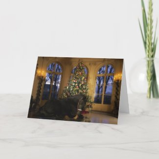 Friesian Mare Under the Tree Holiday Card