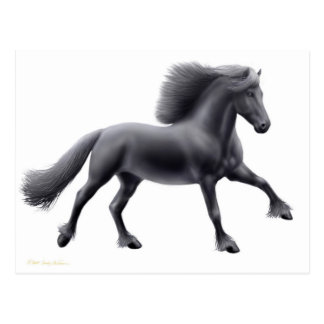Friesian Running Free Postcard