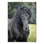Friesian Stallion Card