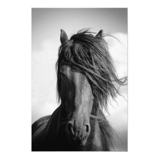 Friesian stallion in the wind. photo print