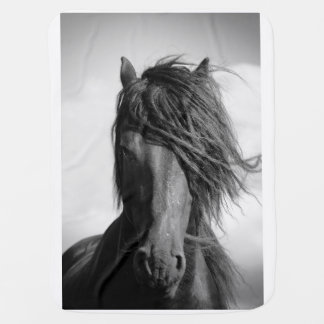 Friesian stallion in the wind. receiving blanket