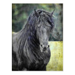 Friesian Stallion Postcard
