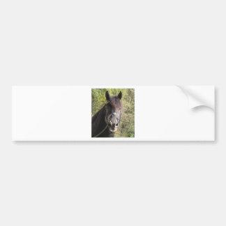 Friesian Stallion Rubin Bumper Sticker