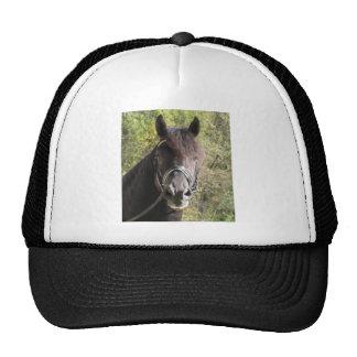 Friesian Stallion Rubin Mesh Hat