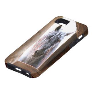 Friesian Window iPhone SE/5/5s Case