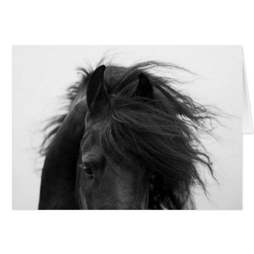 Friesian's Eyes Horse Greeting Card