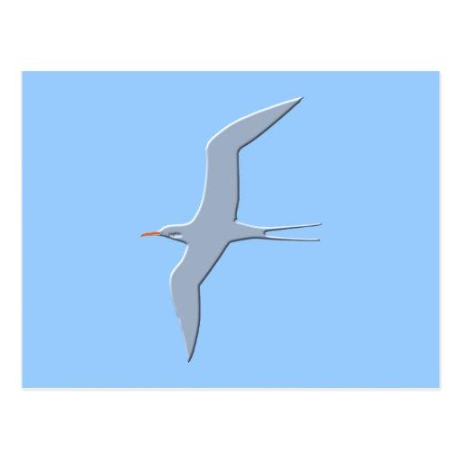 Frigate bird frigate bird postcard