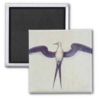 Frigate Bird Magnet