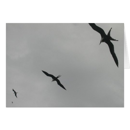 Frigate Birds (Fragata), Isla Isabela, Mexico Card
