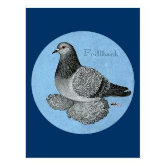 Frillback Blue Grizzle Postcard