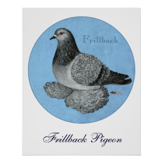Frillback Blue Grizzle Poster