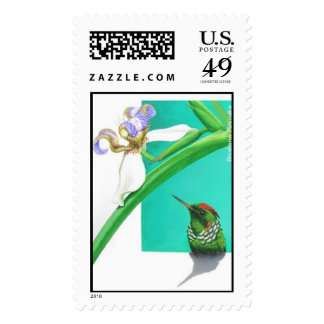 Frilled Coquette - Hummingbird Postage