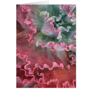 Frilled echeveria card