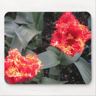 Frilled edge fire Tulips Mouse Mat