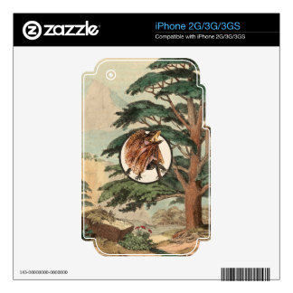 Frilled Lizard In Natural Habitat Illustration Skins For The iPhone 2G