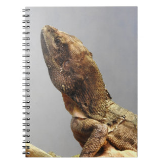 Frilled Lizard Notebook