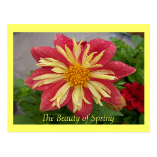 Frilly Dahlia Postcard
