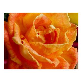 Frilly Orange Rose Gift Range Postcard