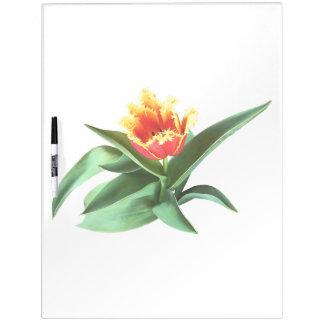 Frilly Orange Tulip Dry Erase Board